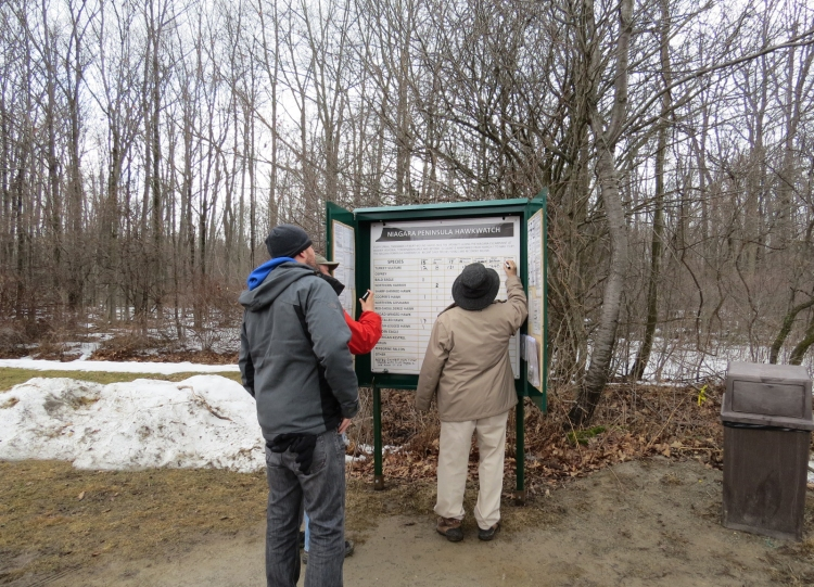 Updating raptor count, Beamer Memorial Conservation Area, Grimsby, ON