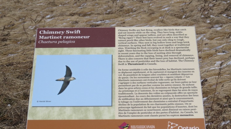 Interpretive sign - Chimney Swift, Bird Studies Canada, Long Point, Ontario