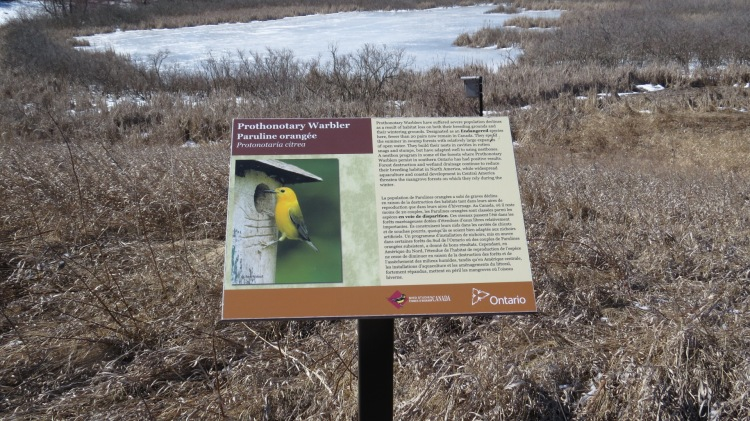 Interpretive sign - Prothonotary Warbler, Bird Studies Canada, Long Point, Ontario