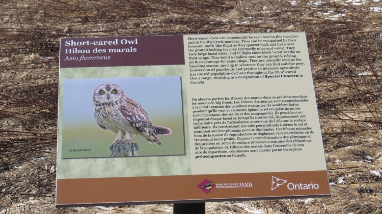 Interpretive sign - Short-eared Owl, Bird Studies Canada, Long Point, Ontario