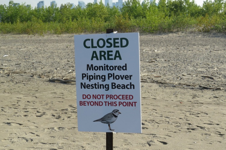 Piping Plover closed area sign