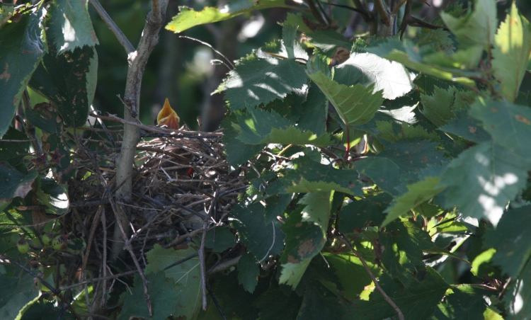 One nestling visible