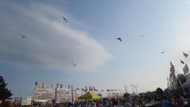 Birding at Ribfest