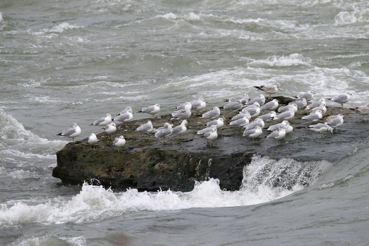 Gull isle