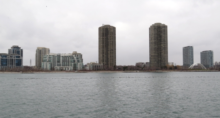 Waterfowl and Toronto skyline
