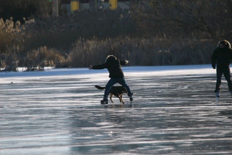 Dog and his owner having fun on Grenadier Pond, High Park