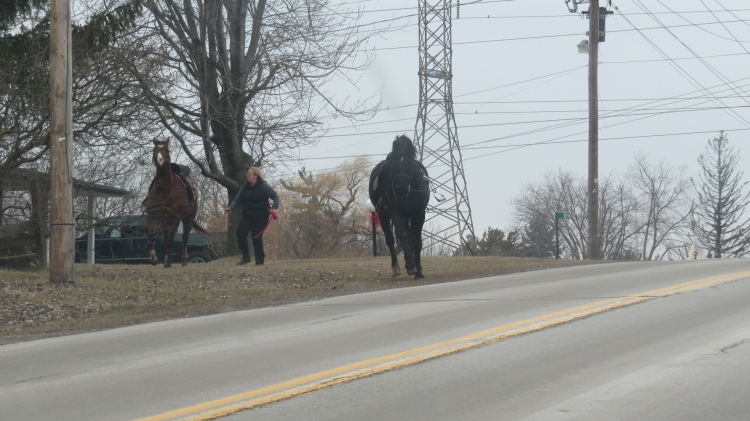 Front row seat to horses on the run.