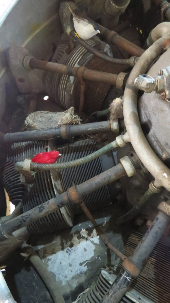 These birds made a home in an engine.