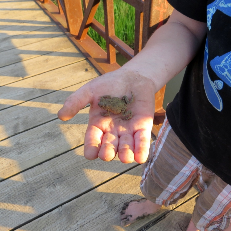 Lad proudly displays a toad he found