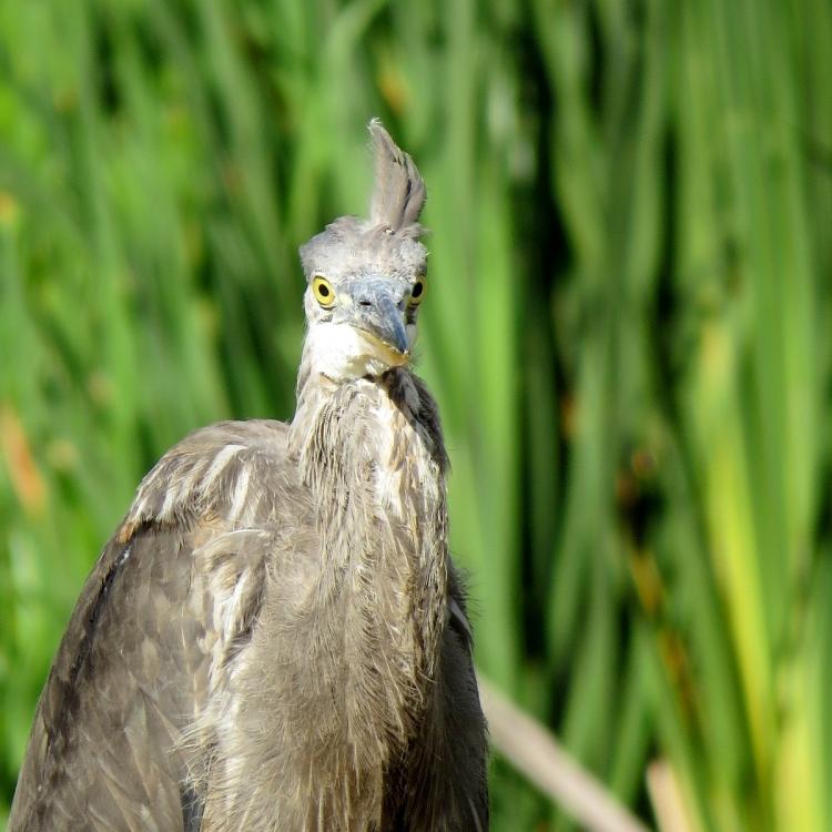 youd-look-crazed-too-if-youd-spent-weeks-preening-your-feathers